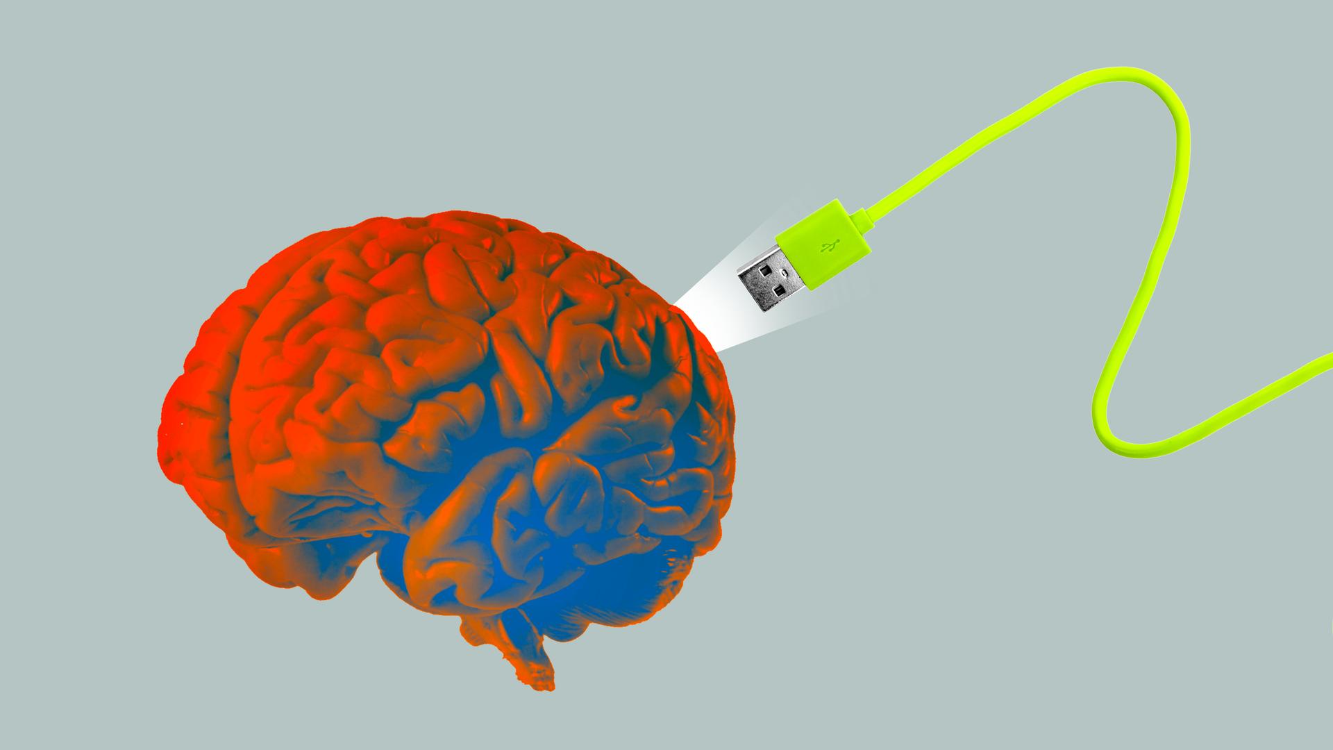 Bu noktada hayatımızın yayılma süresi boyunca beynimiz milyonlarca sinir yolu geliştirmiştir.