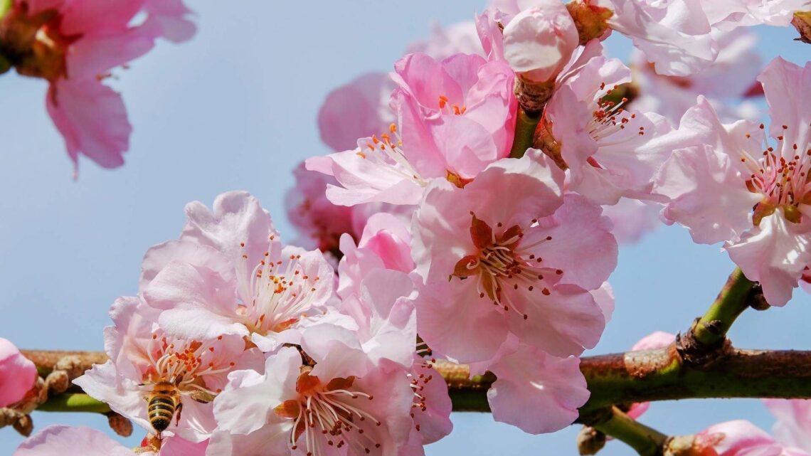 Ikigai: Mutlu Yaşam için bir Japon Sırrı