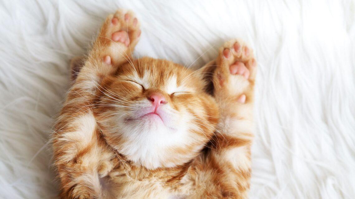 Cats Kittens Ginger 484195 2560x1600