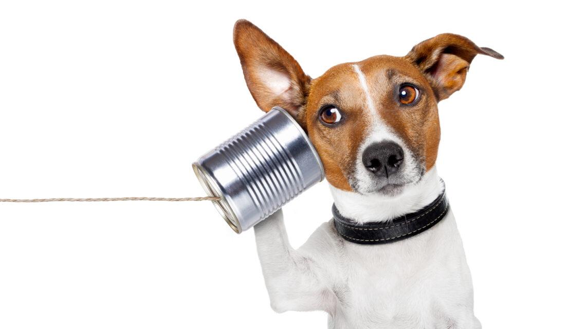 Etkili iletişim, hayatınızın neredeyse her aşamasını daha iyi hale getirebilir.