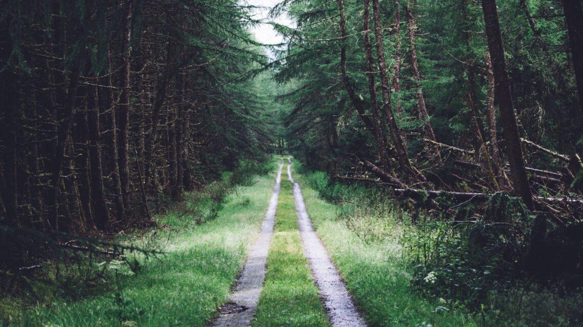 Hayatı Doğru Yaşamanın Yolunu En İyi Nasıl Öğrenebiliriz?