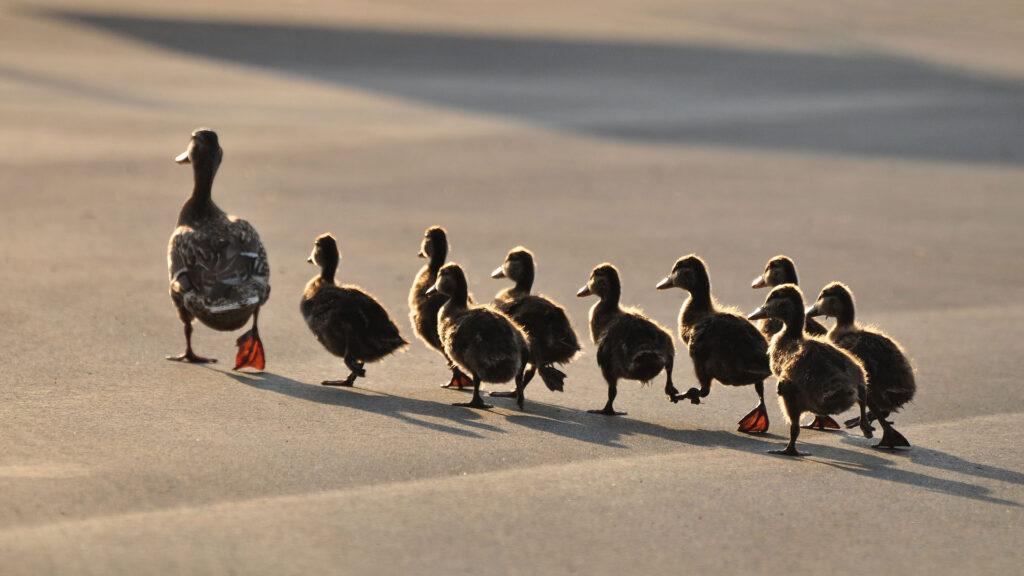 Gerçekten etkili olan liderler, bulundukları konuma hizmet görmek için değil hizmet vermek için geldiklerine inanan liderlerdir.