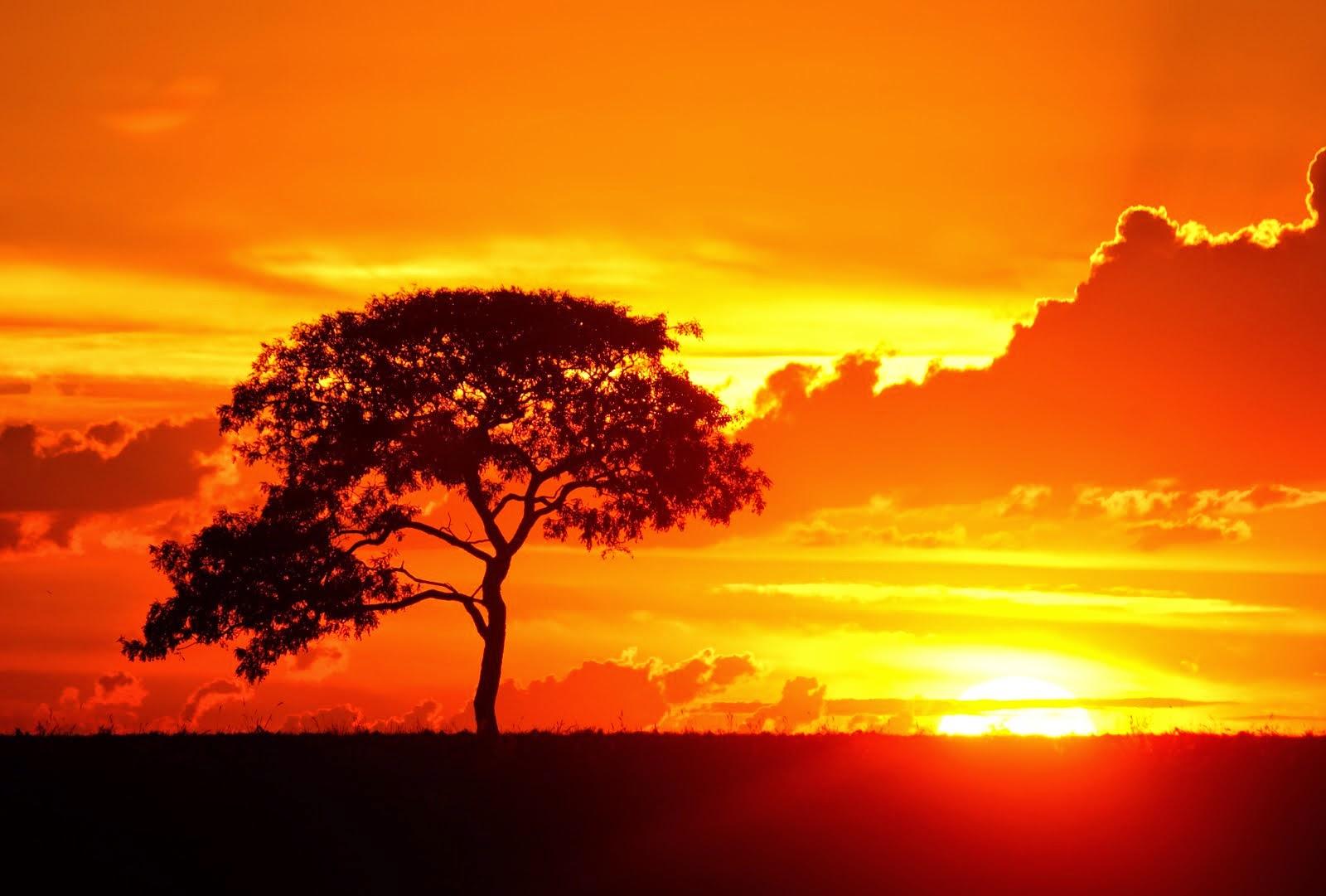 """Dale Carniege - """"Batan güneş için ağlamayın, yeniden doğduğunda ne yapacağınıza karar verin."""""""