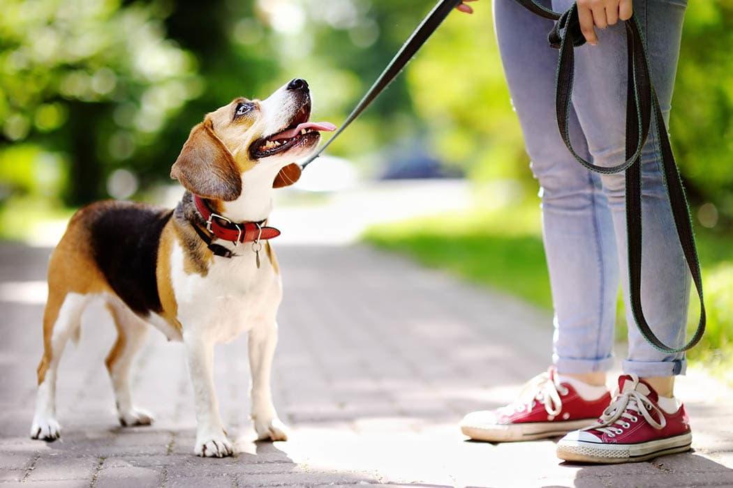 Evcil hayvanlara aileler için, tatilde veya tatil günlerinde şehir dışındayken özen gösterin.